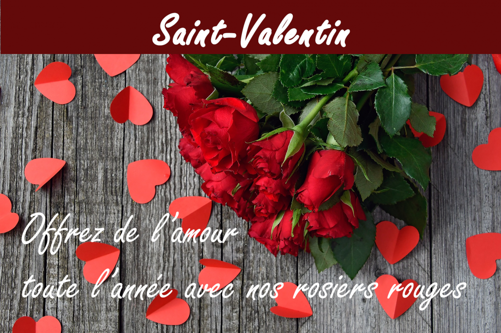 saint_valentin rose rouge